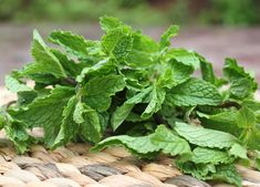 Mint is good for your head and brain.  Mint has vitamin A, which can increase the brain's plasticity, and vitamin C, which may protect against memory loss. Plus, the scent increases alertness.