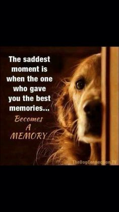Golden Retriever Discover scruff The saddest moment is when the one who gave you the best memories.Becomes A MEMORY I Love Dogs, Puppy Love, Animals And Pets, Cute Animals, Baby Animals, Wild Animals, Pet Loss Grief, Pet Sitter, Pet Remembrance