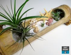 Tillandsia Beach Landscape in Bamboo