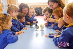 Nuestros peques de P1 #BabygardenISP observaron en su clase los pollitos que nacieron en el centro con motivo de la 4ª #SemanaCienciaISP. Sus caritas lo dicen todo. #InteligenciasMúltiplesISP #InteligenciaNaturalistaISP