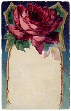Antique Rose Frame - Border ~ Plush Possum Studio