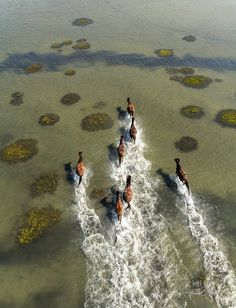 Wild Horses at Shackleford Banks, NC