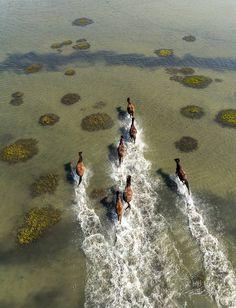 Wild Horses at Shackleford Banks, NC