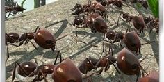 Ant Simulation 3D Full APK Free Download - http://apkgamescrack.com/ant-simulation-3d-full/