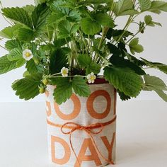 Love wrapping wine bottles in tea towels as gifts but never thought to wrap a potted plant in one. Great idea.