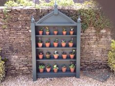 """New auricula theatre installed. These beauties came from Field House Nursery and theatre made by wonderful Keith Amos"" Container Plants, Container Gardening, Plant Theatre, Garden Inspiration, Design Inspiration, Primula Auricula, Primroses, Garden Deco, Potting Sheds"