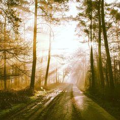 Shot by Livingitrural Edit by myself Go follow him!   #superhubs #followmenow #follow4followback #like4like #moodygrams #agameoftones #hypebeast #photography #streetdreamsmag #photography #nikon #nikon_photography_ #exklusive_shot #hot_shotz #igmasters #instagood #naturelover #tree_brilliance #adventurethatislife #liveauthentic #livefolk #createexplore #createexploretakeover #thecreatorclass #artofvisuals #createcommune @igmasters @tree_brilliance @instagood @superhubs @photoarena_nature…