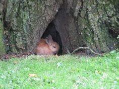Rabbit Baby Rabbits Wild - Free photo on Mavl Rabbit Hide, Rabbit Baby, Baby Cartoon Drawing, Pet Supermarket, Cute Animal Clipart, Fur Tree, Pet Supplies Plus, Rabbit Breeds, Sleeping Puppies