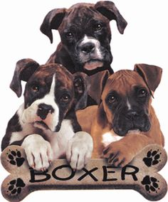 We have had of each of the colors shown here.  Love boxers!