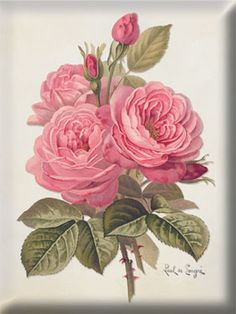 Romancing the Rose...Vintage Rose Art ...By Artist Unknown... @;}~