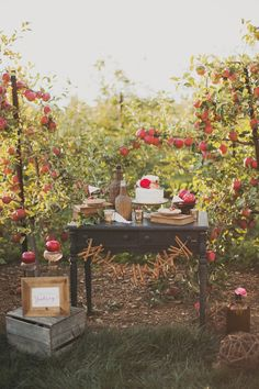 Apple Orchards... Everyone talks about barns and vineyards, but why have I never heard about going to an orchard?