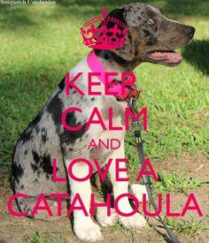 Marceline, Owned by Sasquatch Catahoulas https://www.facebook.com/SasquatchCatahoulas