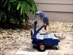 Bird Buggy