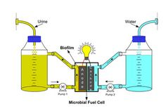 Urine fuel cell - Urine-powered fuel cells could generate electricity and reclaim essential nutrients directly from human and animal waste, say UK scientists. The development could make wastewater treatment easier and cheaper, and provide an abundant source of locally generated power.