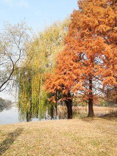 가을, 호수공원 - 단풍