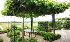 Afbeeldingsresultaat voor plataan tuin