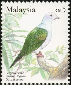Green Imperial Pigeon stamps - mainly images - gallery format