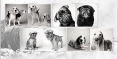 Dogs Aging Gracefully  #Dogagingimages #doglifespan