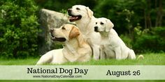 NATIONAL DOG DAY National Dog Day is observed annually on August This day encourages dog ownership of all breeds. Whether mixed or purebred, embrace the opportunity for all dogs to live a h… All Dogs, Best Dogs, Dogs And Puppies, National Day Calendar, Gato Gif, National Days, National Holidays, August 26, Dog Travel