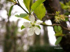 Spring in Donegal Donegal, Nike, Jordans, Spring, Shoe