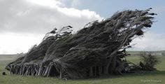 Windy #wind #weather