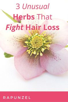 Some herbs may not sound quite familiar but can be quite helpful in growing thick and strong hair. One of them is actually controversial as it is both can be de Castor Oil For Hair, Hair Oil, Organic Hair Care, Bald Hair, Stop Hair Loss, Skin Care Remedies, Strong Hair, Grow Hair, Health