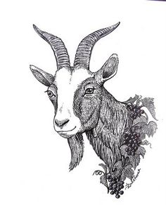 draw a goat - Google Search