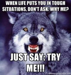 angry wolf sayings Wisdom Quotes, True Quotes, Great Quotes, Motivational Quotes, Inspirational Quotes, Wolf Qoutes, Lone Wolf Quotes, Strong Quotes, Positive Quotes