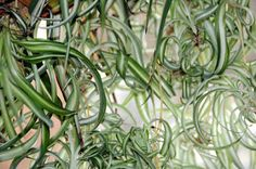 Landhaus Blog : Die schönsten ungiftigen Zimmerpflanzen für Famili...