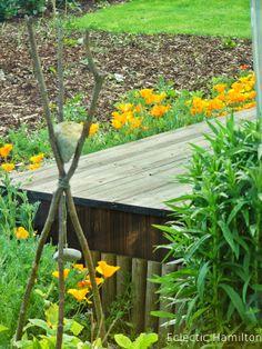 Kalifornischer Goldmohn in meinem Garten. California Poppy in my garden. http://eclectichamilton.blogspot.de/