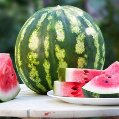 A pretty, light green melon with dark stripes that's famous for its high sugar content and great flavor. Seeds are small and dark. Vines resistant to anthracnose and fusarium wilt. Give vines plenty of Watermelon Plant, Sweet Watermelon, Fruit Plants, Fruit Trees, Joanna Gaines Decor, Green Melon, Peach Trees, Edible Garden, Food Festival