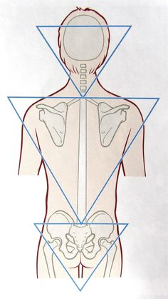 Notes on Anatomy and Physiology: Function of the Thoracolumbar Fascia, Part 1 Yoga Anatomy, Human Anatomy, Fascia Stretching, Psoas Release, Tight Hip Flexors, Psoas Muscle, Muscle Anatomy, Anatomy And Physiology, Massage Therapy