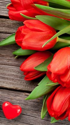 Beautiful Flowers Pictures, Beautiful Flowers Wallpapers, Amazing Flowers, Beautiful Roses, Rose Flower Wallpaper, Flowery Wallpaper, Plant Wallpaper, Red Tulips, Tulips Flowers