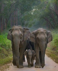 If only humans took care of their young as well as Elephants, per family and community