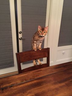 What as you can see im not on the table sooooo - http://cutecatshq.com/cats/what-as-you-can-see-im-not-on-the-table-sooooo/
