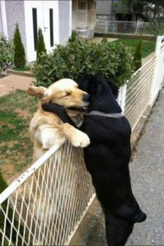 Theirs was a forbidden romance. Tiny and Rusty met at the back fence for purloined embraces.