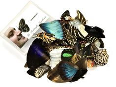 The Ethical Butterfly Company — Loose Butterfly Wings