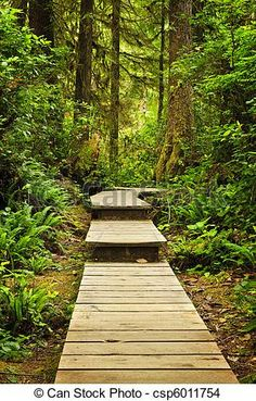 Wooden Path Through Temperate Rain Forest Stock Photo (Edit Now) 70830700 Wooden Pathway, Wooden Walkways, Lemon Water Weight Loss, Magic Forest, Pacific Rim, Deck Design, Photo Craft, Pathways, British Columbia