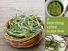 I picked up some garlic scapes at the farmer's market and was looking for different ways to use it.  This looks good and I'll try the pesto recipe.