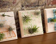 creative DIY air plants display ideas wooden frames wall decoration ideas