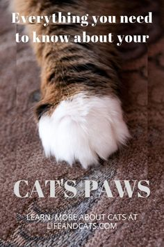 Paw and claw care for your cats. Best way to trim your cat's claws alone. Grooming and health concerns for your cat's paws and claws. Cat Paws, Dog Cat, Hemingway Cats, Core Workout Routine, Information About Cats, Kitten Care, Cat Care Tips, Paws And Claws, Cat Behavior