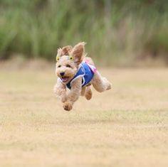 飛行犬の撮影会に参加しました。投稿者:chloeママさん