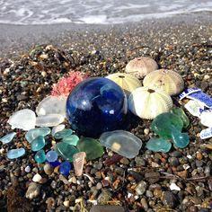 Amazing beach finds!!