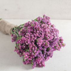 Add delicate statice flowers to fresh and dried bouquets. Selected for the field and greenhouse. Our statice seeds are satisfaction guaranteed. July Flowers, Pretty Flowers, September Flowers, Seed Packaging, Beneficial Insects, Garden Pests, Seed Starting, Flower Seeds, Dried Flowers
