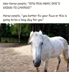 Non horse people versus horse people Funny Horse Memes, Funny Horse Pictures, Funny Animal Jokes, Funny Horses, Cute Horses, Pretty Horses, Beautiful Horses, Horse Humor, Hilarious Memes