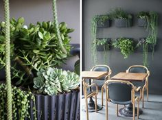 Restaurant design makeover by HGTV host Emily Henderson. Find these planters at www.urbilis.com/living-wall-planter/
