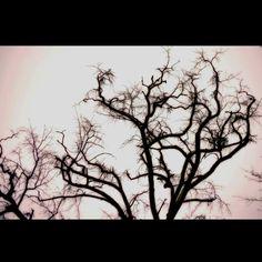Funky Tree in Greer, SC