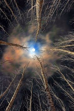 moon through bare forest