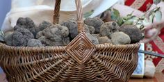 Truffles in Provence