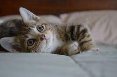 Daydreaming Tabby! | Cute Kitten, Lounging Time | Kitten | Cat Smirk
